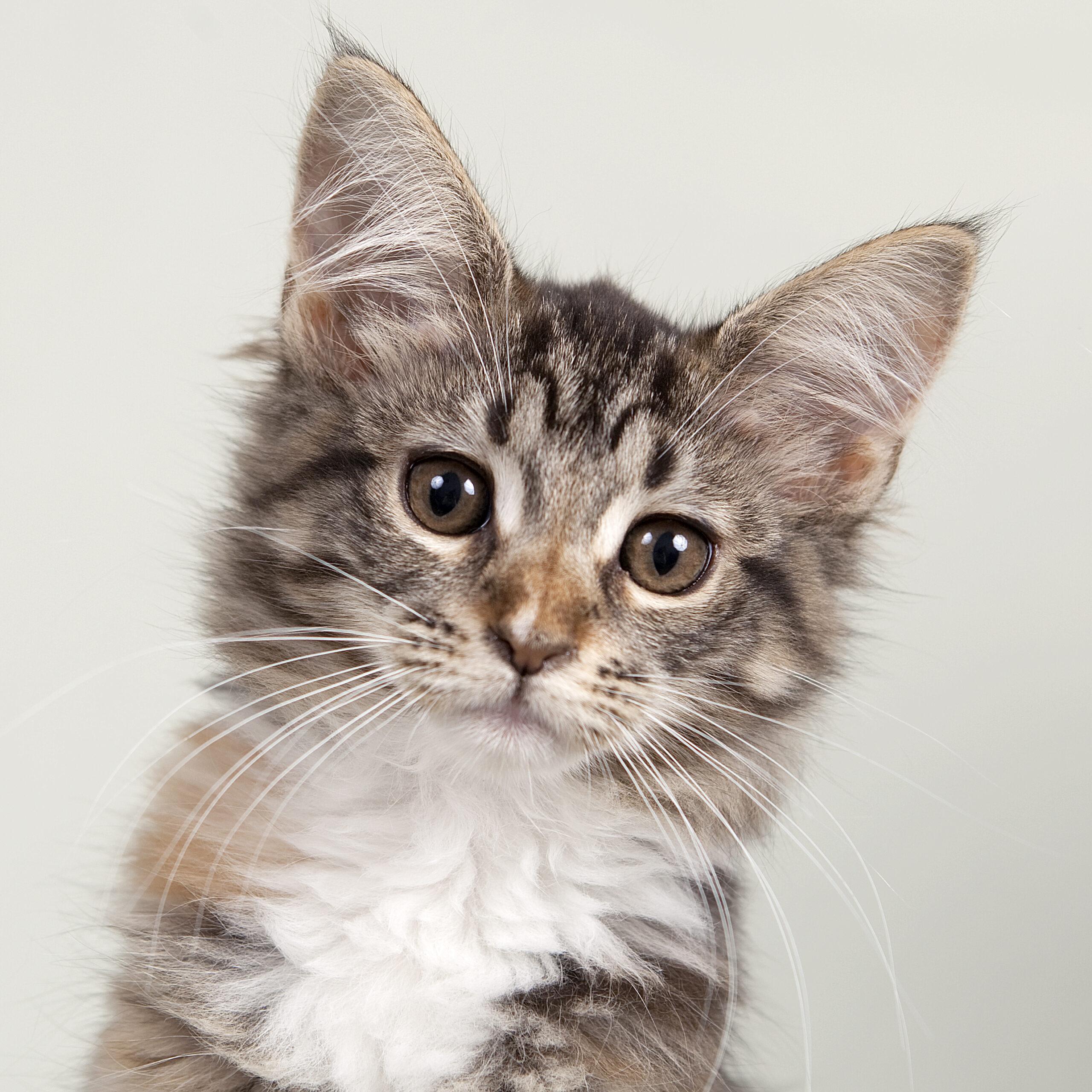 Bij Foto di Vita zijn alle dieren welkom, van honden, katten en konijnen tot paarden, reptielen en vogels.